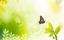 papillion-bulle